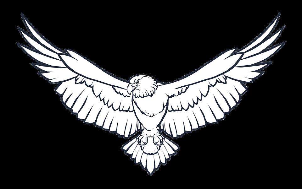 ᐈ Dibujos De águilas Guia Imagenes De Aguilas Mas Lindas