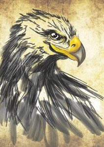 Aguila real dibujo