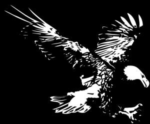 Imagenes de Aguilas Volando