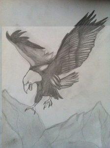 Imagenes de Aguilas reales