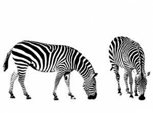 Imagenes de Cebras para colorear