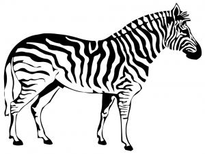 Imagenes de Cebras para dibujar