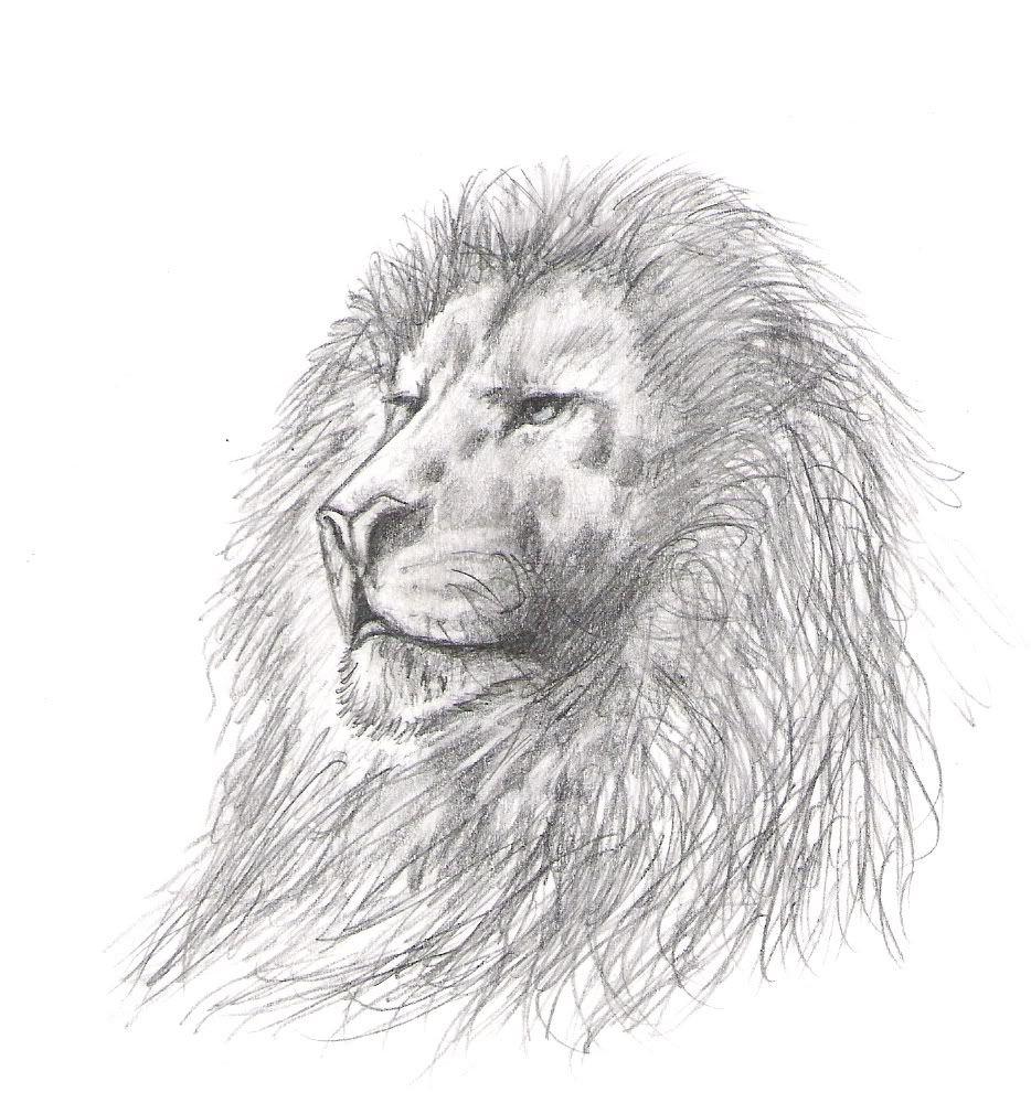 animales para dibujar para niños