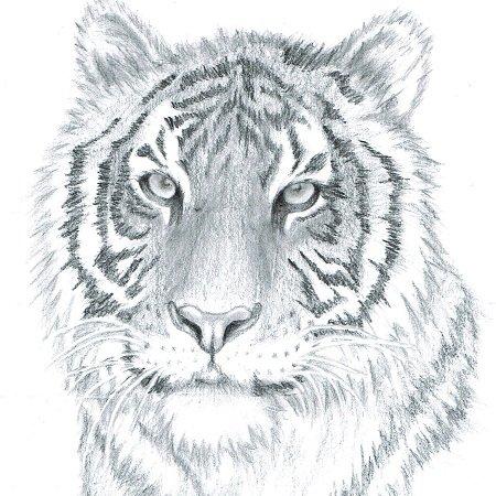 animalitos dibujos