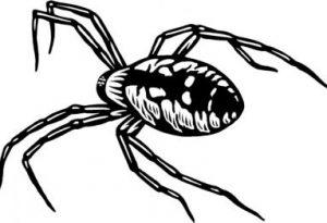 arañas para dibujar
