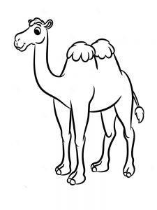 camello animado