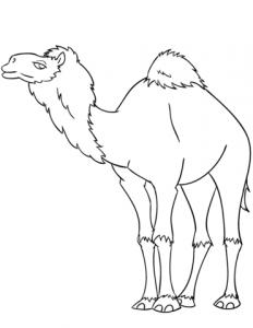 camello para niños