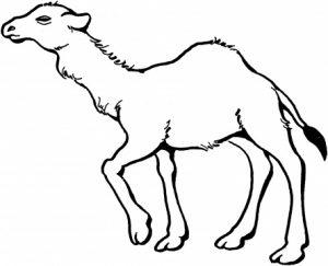 camello para pintar