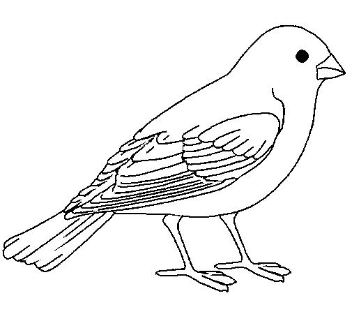 ✎ Dibujos de Canarios 【+Tutorial】 Bellas imagenes de Canarios