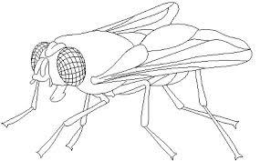 caricatura de mosca