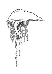 como dibujar a medusa