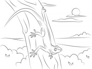 como dibujar lagartijas
