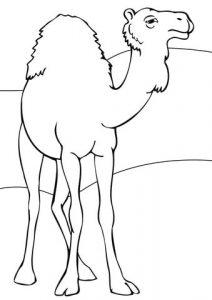 como dibujar un camello