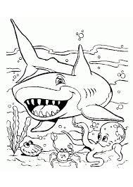 como dibujar un tiburon blanco