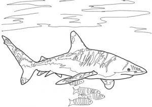 como dibujar un tiburon facil