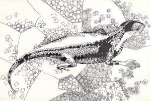 como dibujar una lagartija facil