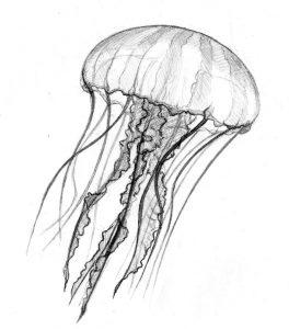 dibujo de avispa de mar para colorear