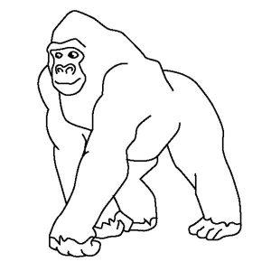 dibujo de gorila facil