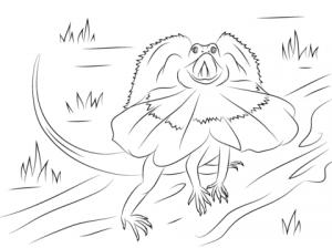 dibujo de lagarto para niños