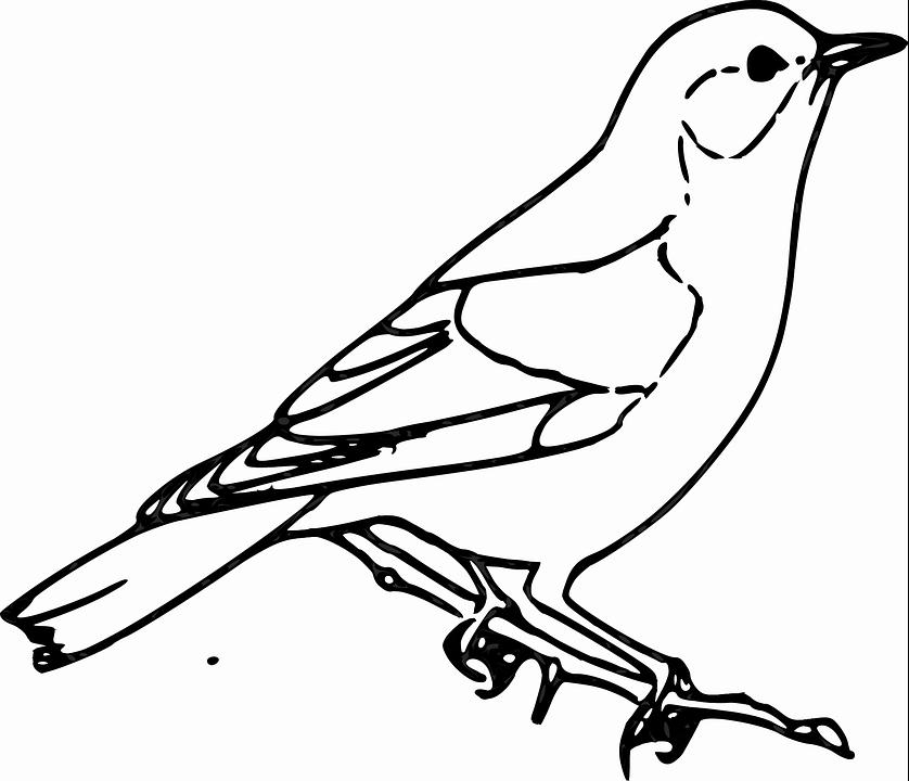 ᐈ Dibujos De Avesguiacomo Dibujar Un Pájaro