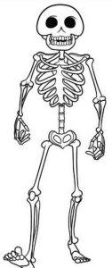 dibujo del esqueleto humano para niños