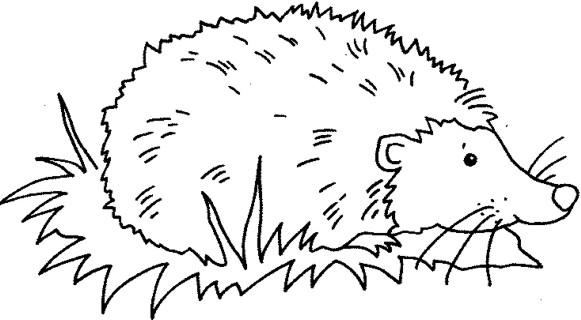 ᐈ Dibujos De Erizosguiatutorial Para Pintar Erizos