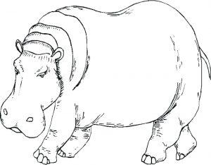 dibujo hipopotamo infantil