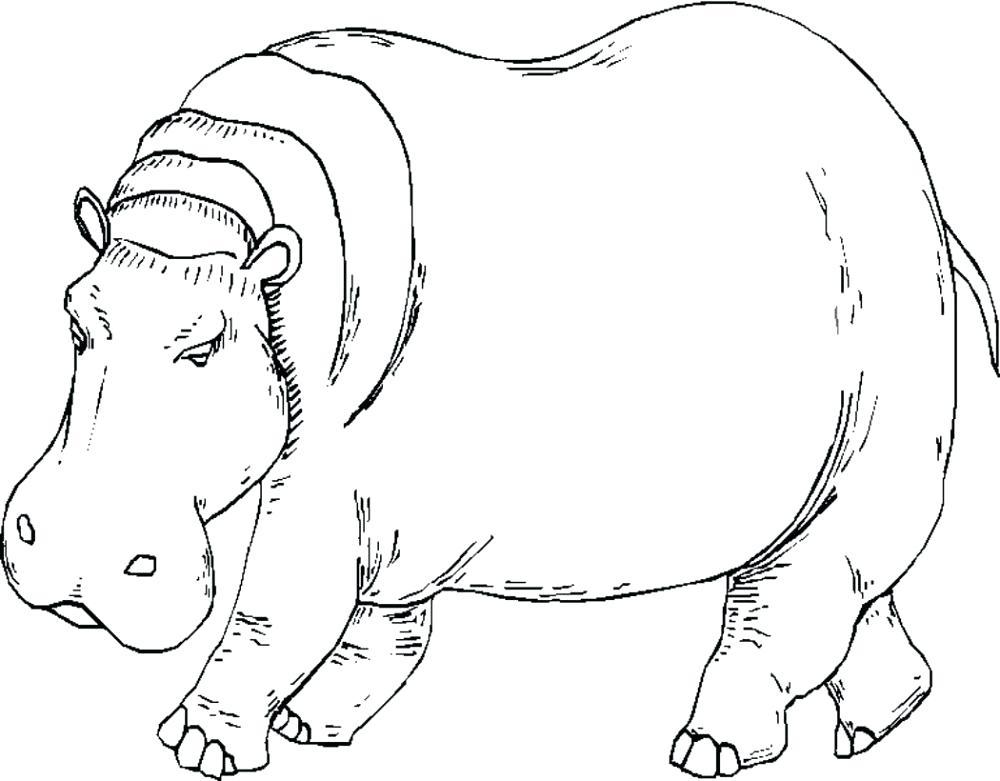 Dibujos De Hipopotamos Tutorial Dibujar Un Hipopótamo Fácil