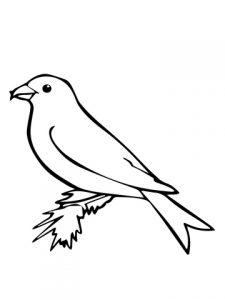 dibujos animados de canarios