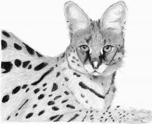dibujos de animales para dibujar faciles
