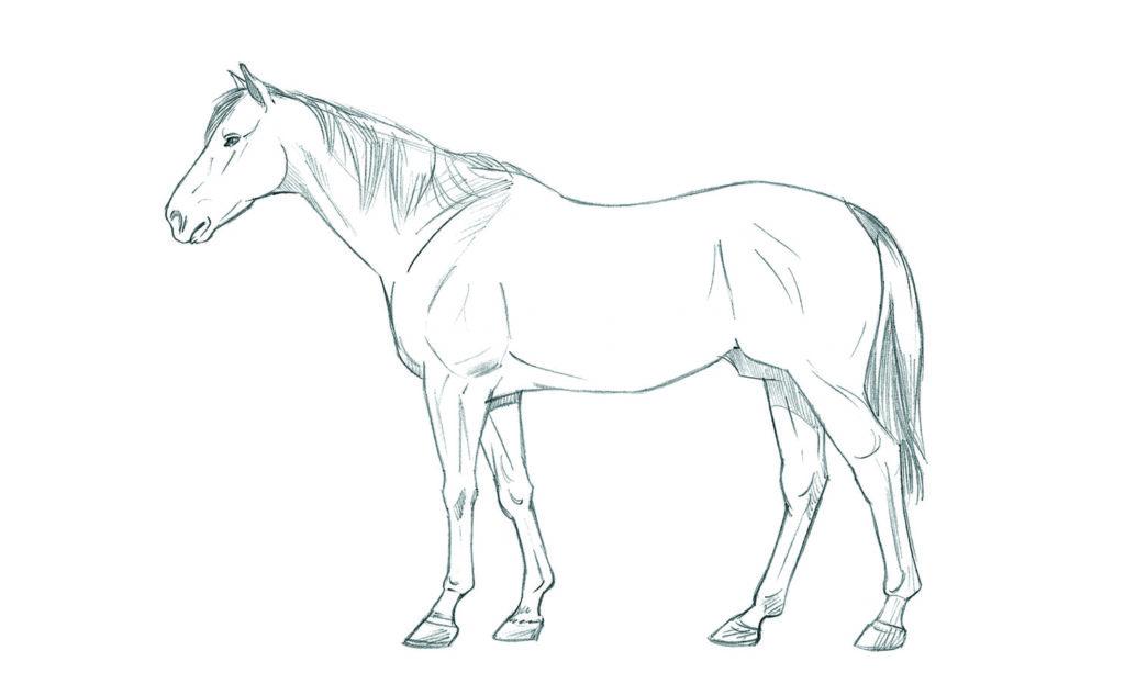 dibujos de animales para dibujar