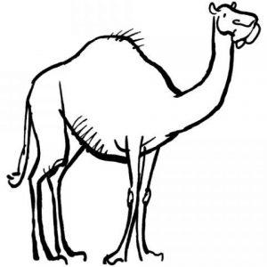dibujos de camellos faciles