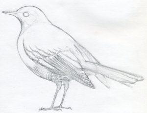 dibujos de canarios animados