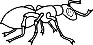 Dibujos De Hormigas Tutorial Cómo Dibujar Una Hormiga