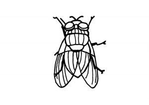 dibujos de moscas para colorear