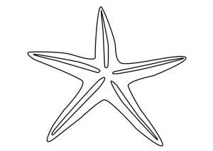 estrellas de mar dibujos
