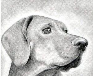 figuras de animales para dibujar