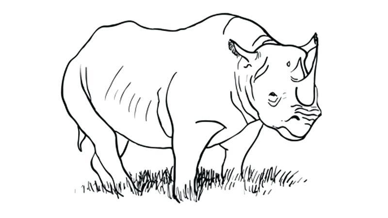 figuras de animales para pintar