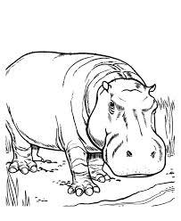 hipopotamo caricatura