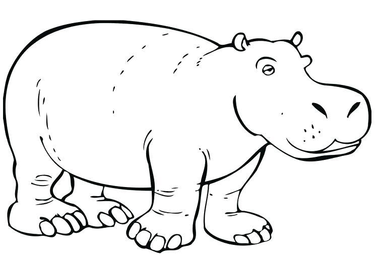 ᐈ Dibujos de Hipopotamos【+Guia】Dibujar un hipopótamo fácil