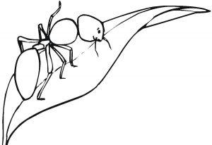 hormiga animada para colorear