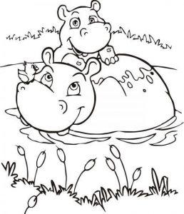 imagen de hipopotamo para colorear