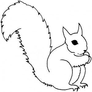 imagenes de ardillas para dibujar