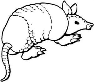 imagenes de armadillos animados