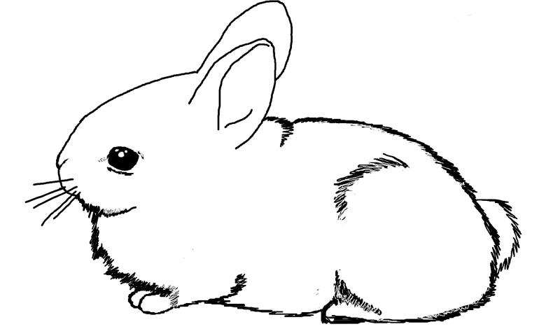 Dibujos De Conejos Tutorial Pintar Un Conejo Kawaii