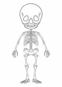 imagenes de esqueleto humano