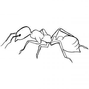 imagenes de hormigas para colorear