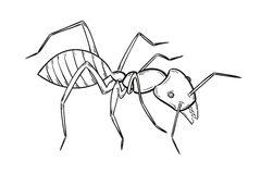imagenes de hormigas para dibujar