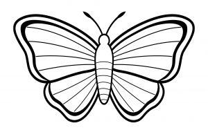 imagenes de mariposas reales
