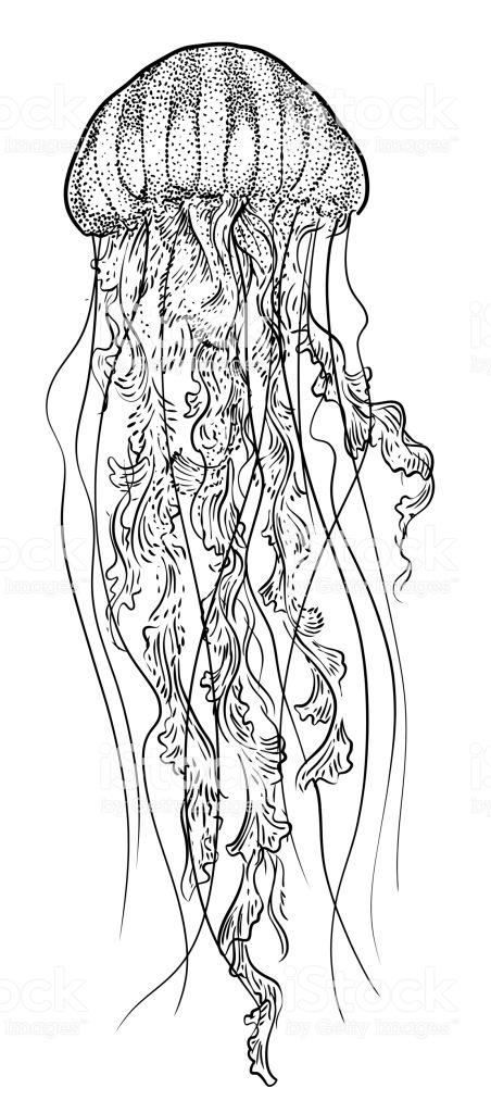 ᐈ Dibujos De Medusasguiacómo Dibujar Una Medusa